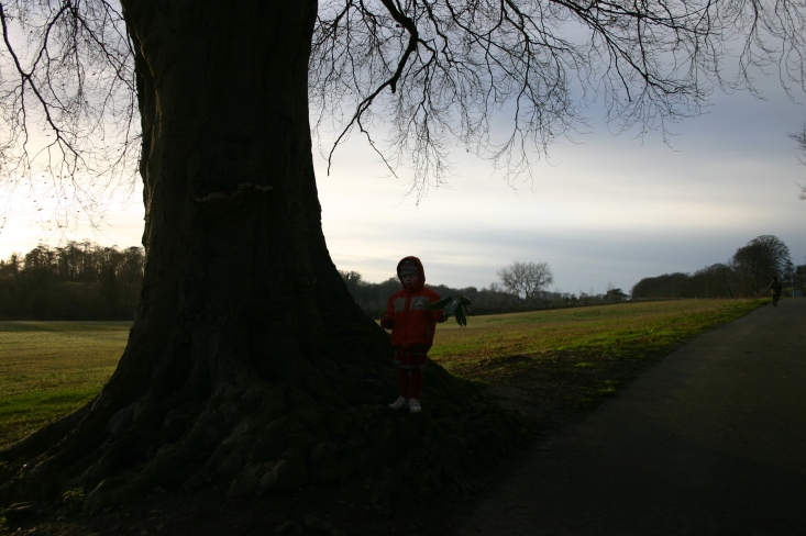 The Beech Tree in St. Catherine's with a very young Tamsyn holding a bamboo leaf. Bamboo grow in the park along by the River Liffey.
