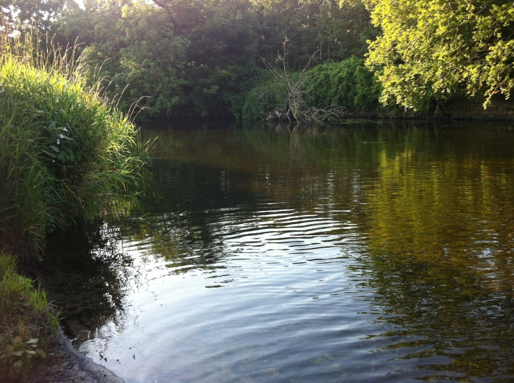 The Liffey in the Park. Very shallow at this time of year, which cannot be good for the overall health of the river.