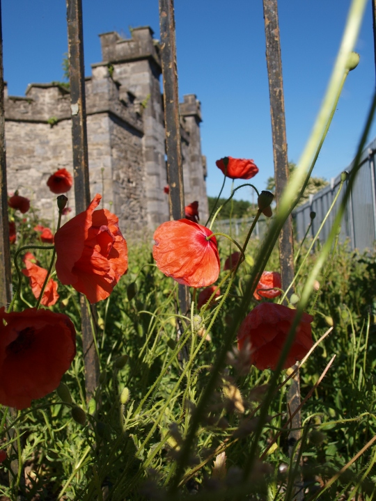 Poppies at the gate designed by Francis Johnston, the same gent who designed the GPO in Dublin.