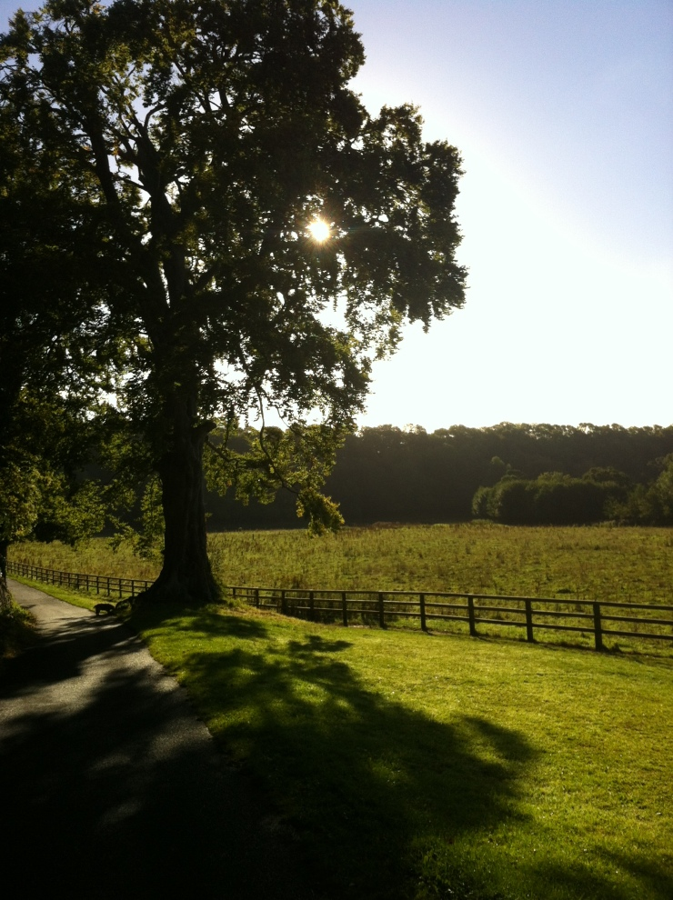 The Great Beech in St. Catherine's Park.