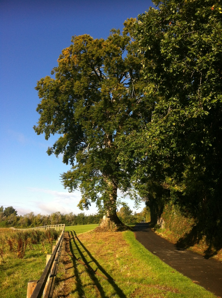 Another view of the Great Beech.