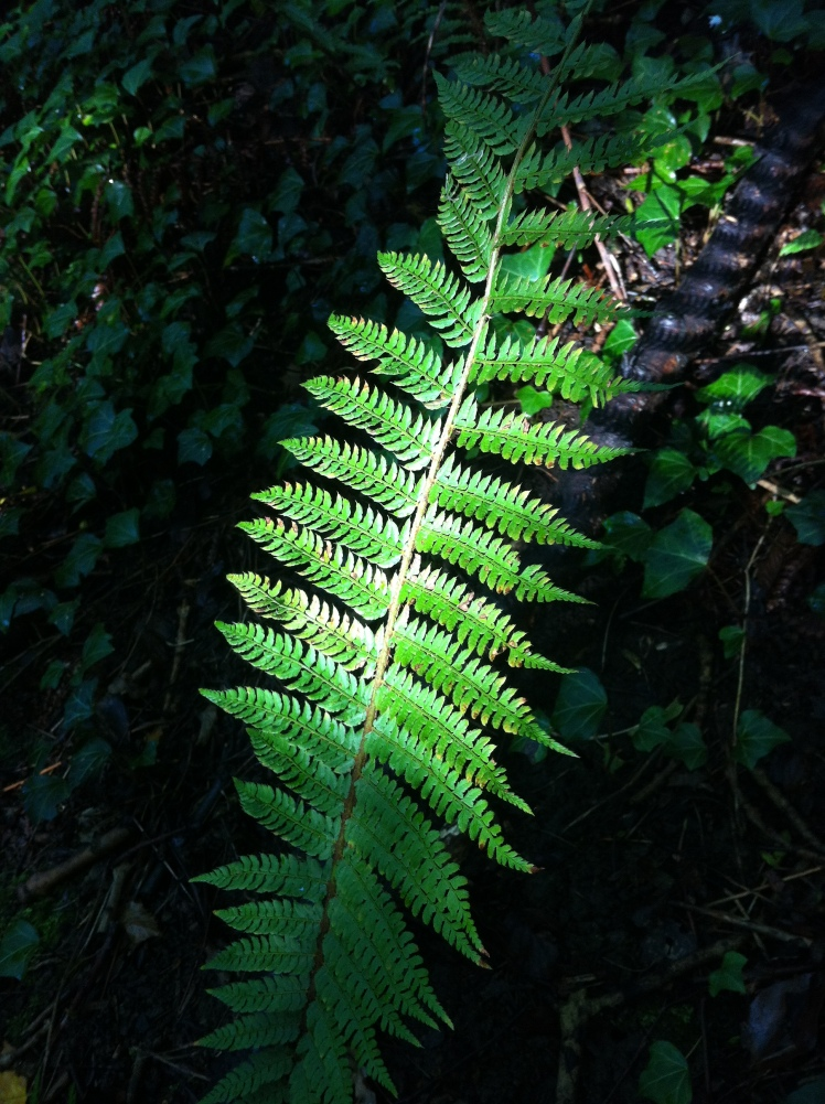 A fern deep in the woods.