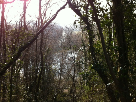 A view of the Liffey and flooded field through the trees from the top path.