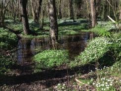 Flooded woodland