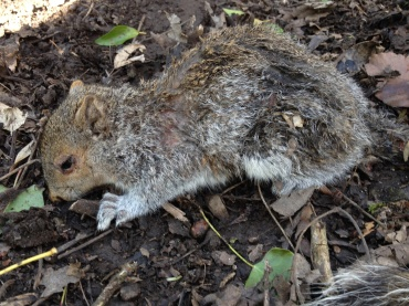 A sad little Squirrel